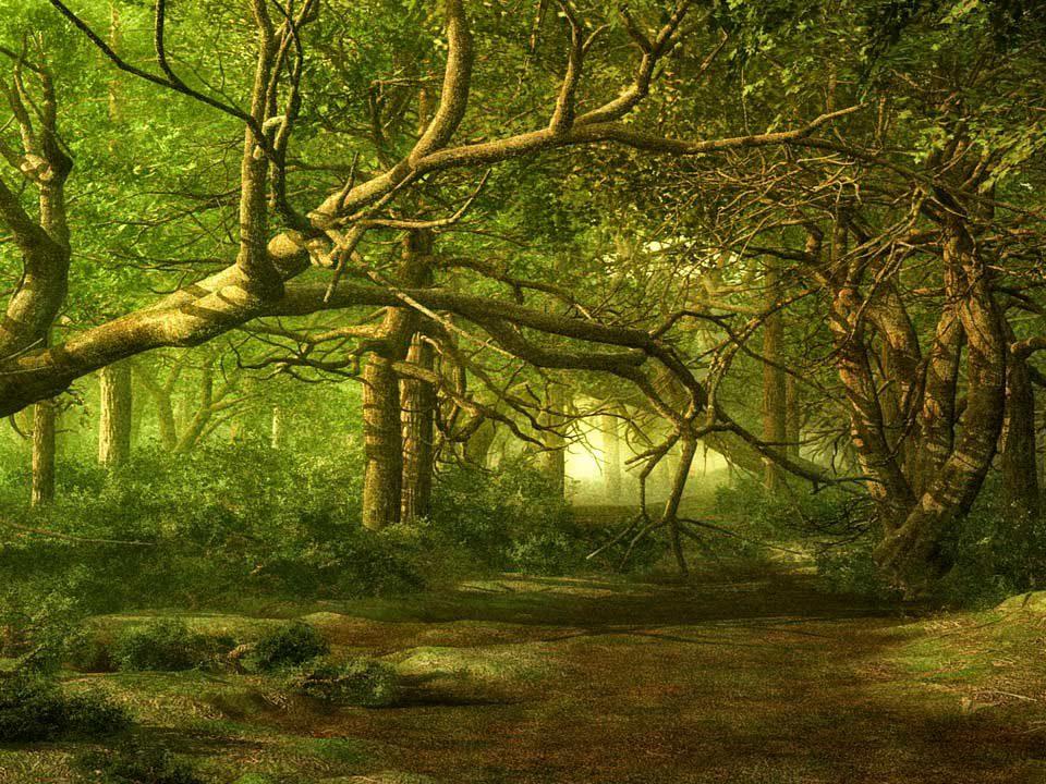El bosque animado. Descripciones,librosynovelas