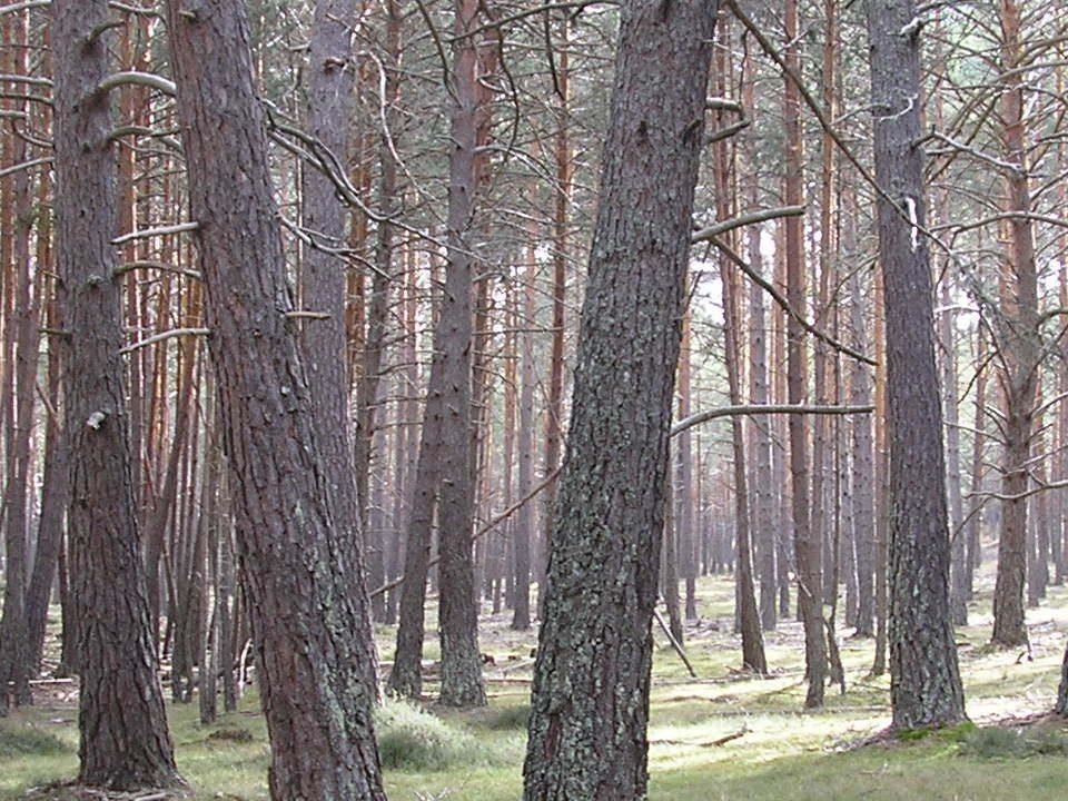 Los-árboles-angustiados.Opinión-librosynovelas