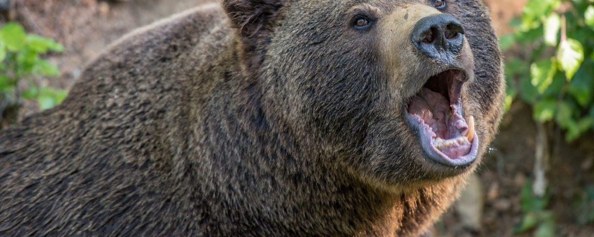 La noche del oso. Aventuras, librosynovelas